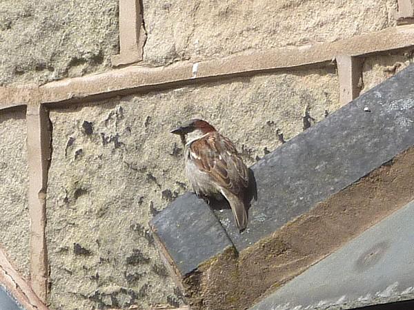 20 Sparrow