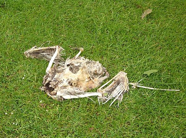 21 TPT8 stripped skeleton