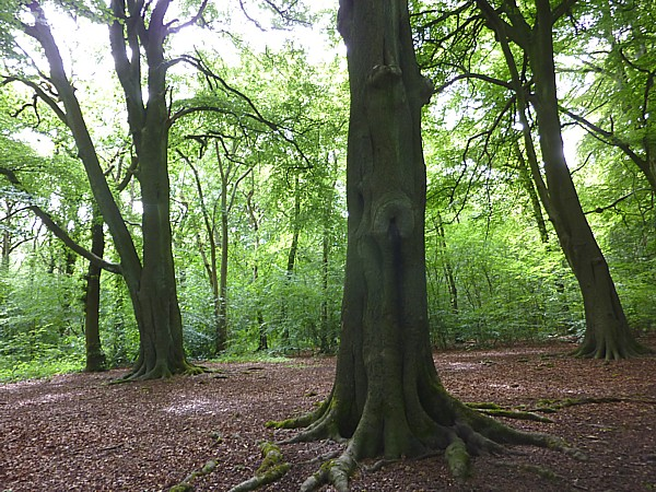 24 Childwall woods