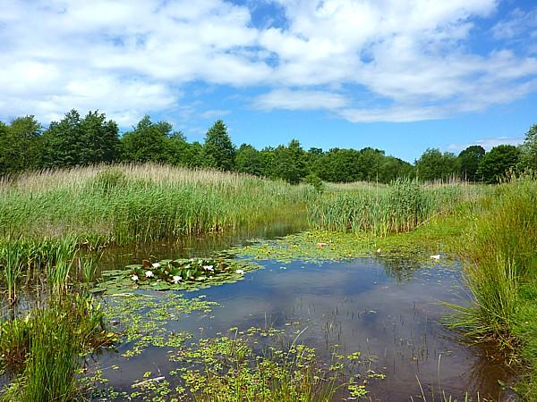 25 Kirkby Millbrook pond
