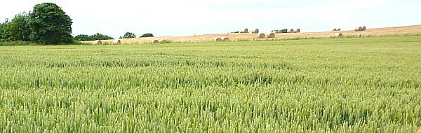26 Gorse Hill hay on horizon