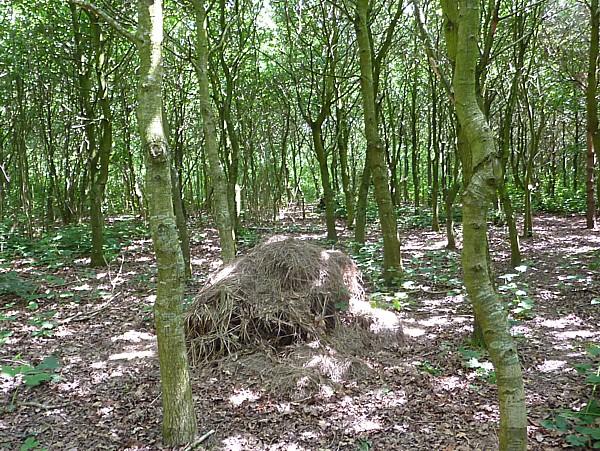 26 Gorse Hill mammal pile