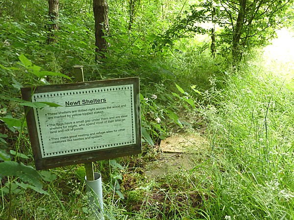 26 Gorse Hill newt shelter