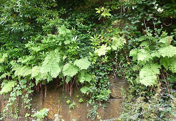 31 TPT9 Royal fern on wall