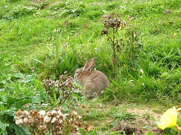 32 Ainsdale sick bunny