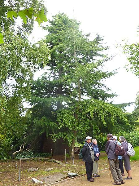 33 Botanic Cedar and Gingko
