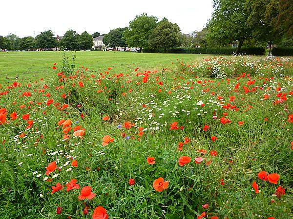 33 Botanic Newsham wildflowers