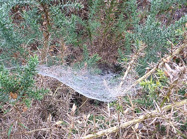 35 Bidston sheetweb