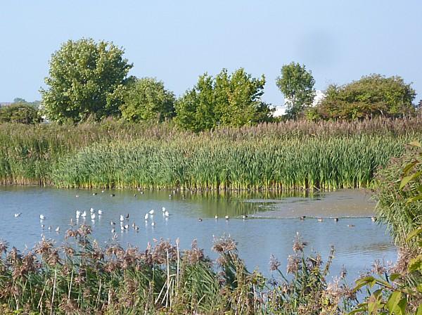 37 New Ferry Pond
