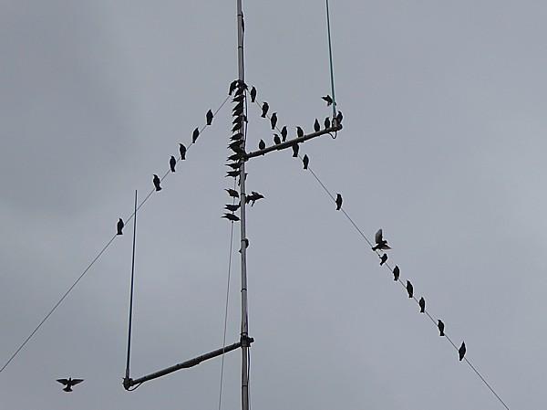 40 Stadt Moers Starlings on aerial