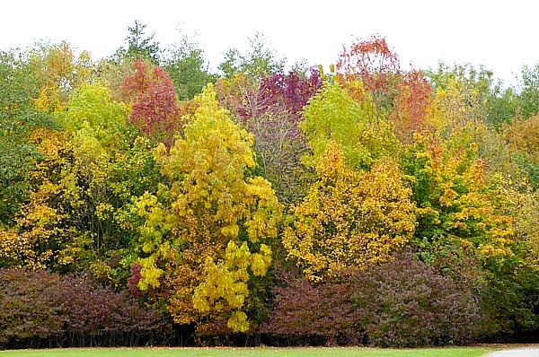 40 Stadt Moers autumn colour