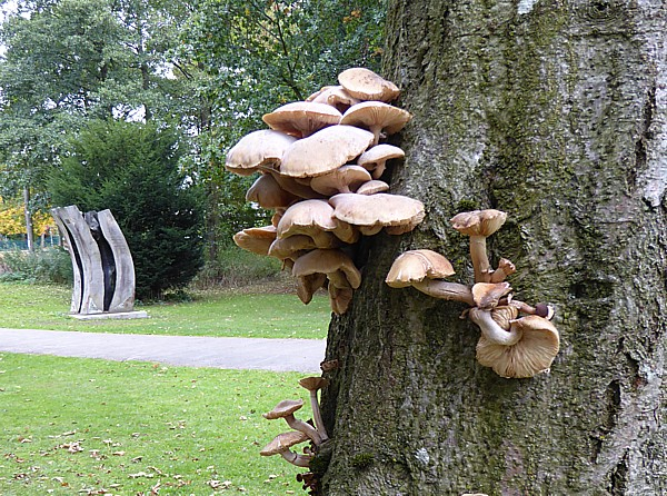 40 Stadt Moers tree with fungi
