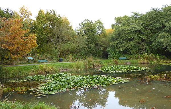 41 TPT11 Ducky pond