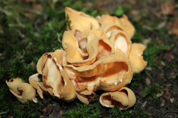 MNA Dibbinsdale Cup Fungi