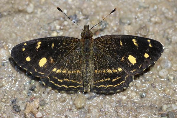 MNA Peru Butterfly1