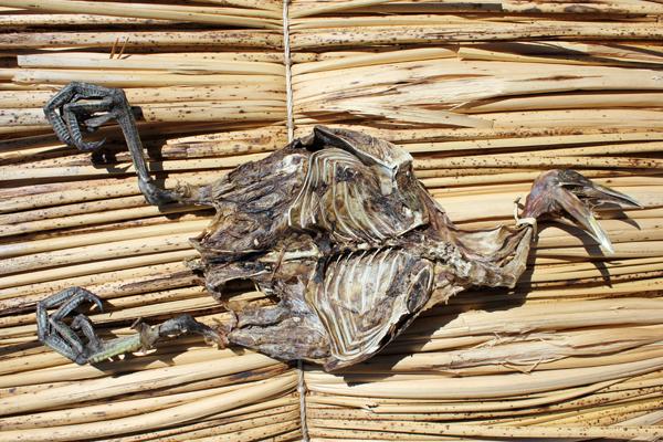 MNA Peru Corpse1