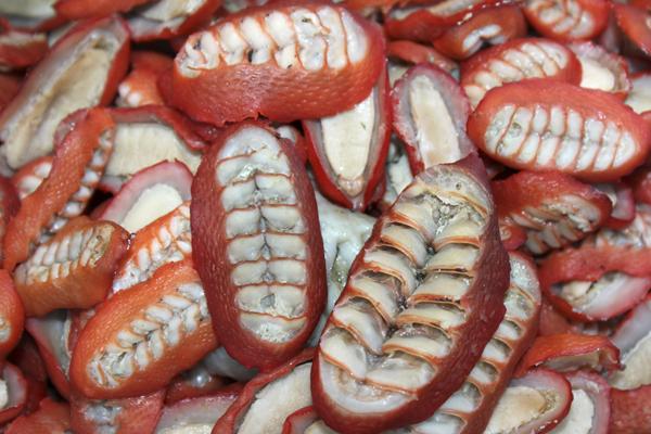 MNA Peru Seafood1