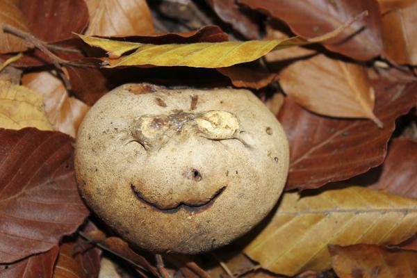 MNA Tatton Smiley Earthball1
