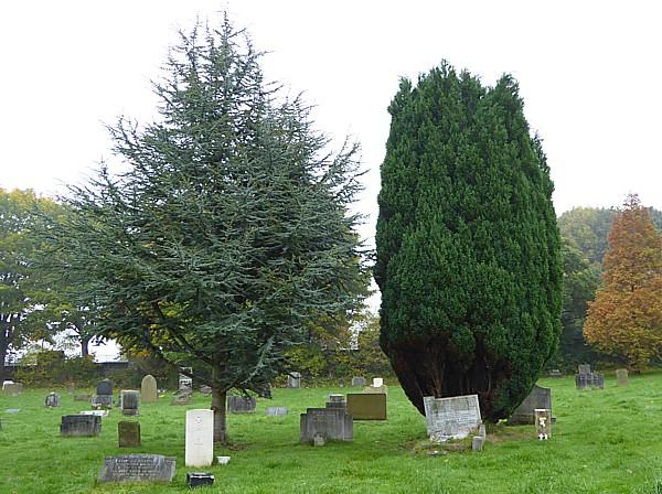 42 Flaybrick Cedar and Yew