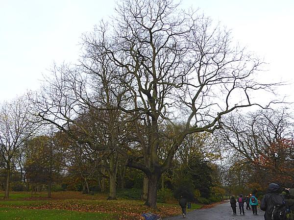 46 Sefton Park Black Walnut group