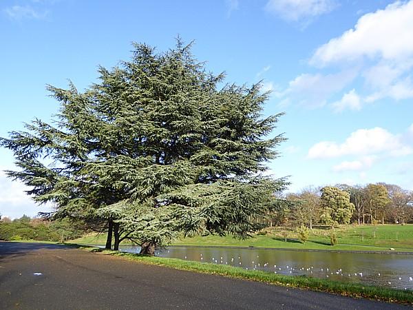 46 Sefton Park Cedar