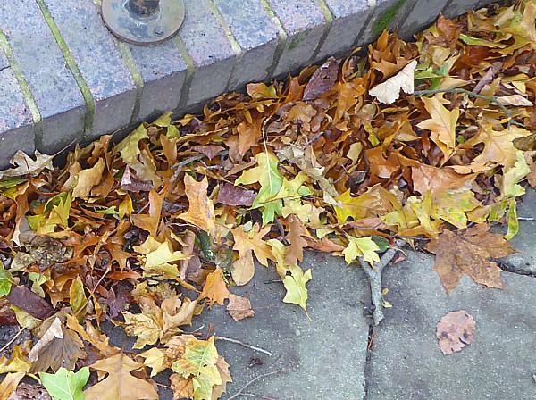 46 Sefton Park Red Oak litter