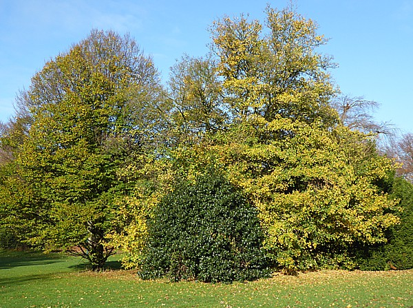 47 Birkenhead Park green and yellow