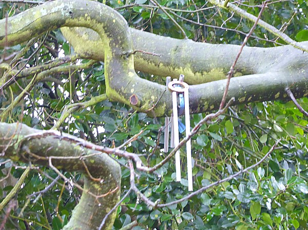 50 Croxteth device in tree