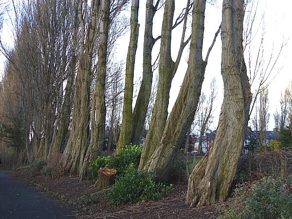 01 Waterloo Lombardy trunks