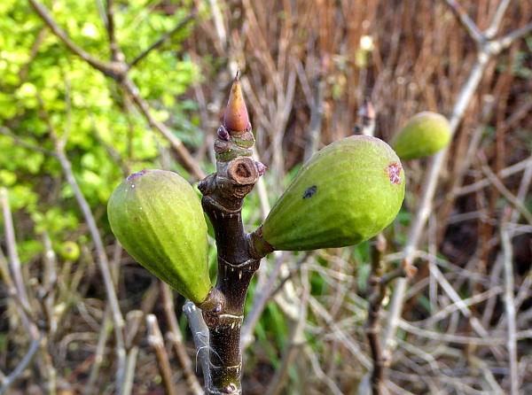 05 Waterloo figs