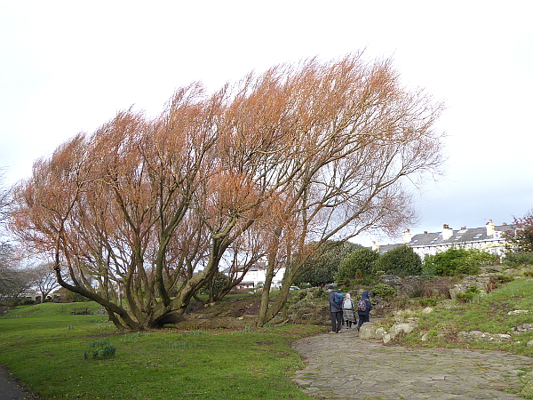 05 Waterloo willows