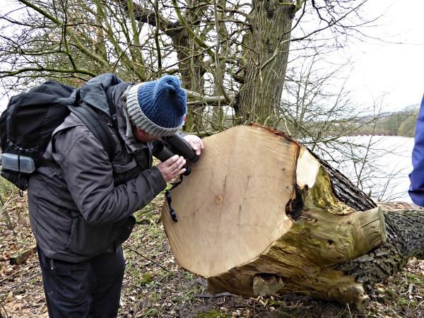 07 Carr Mill cut log