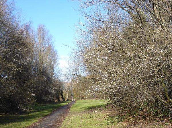 09 Rimrose path