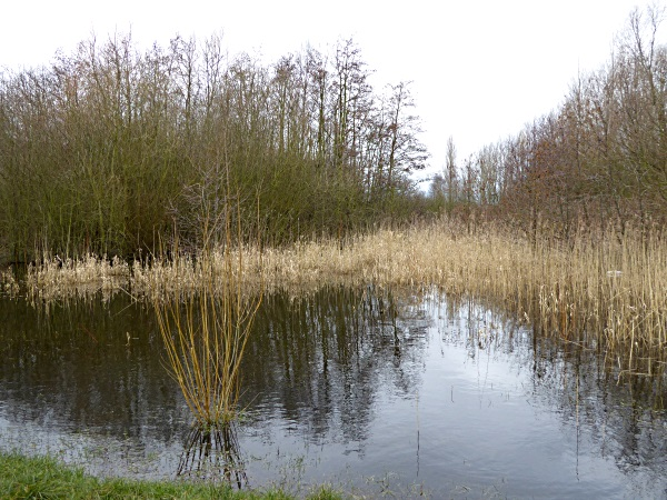 09 Rimrose swamp and reeds