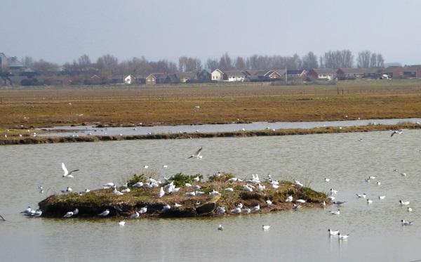 11 Marshside BHG island