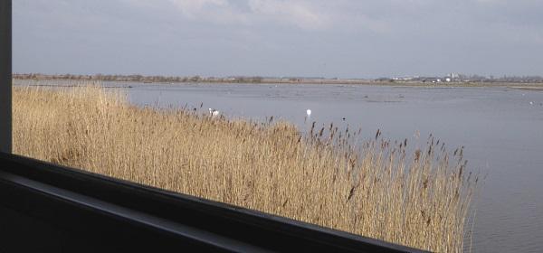 11 Marshside hide view