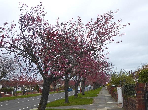 15 Churchtown cherry road