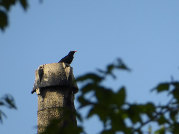 17 Southport killer Blackbird