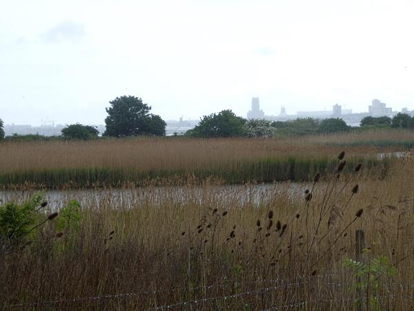 19 River park city view