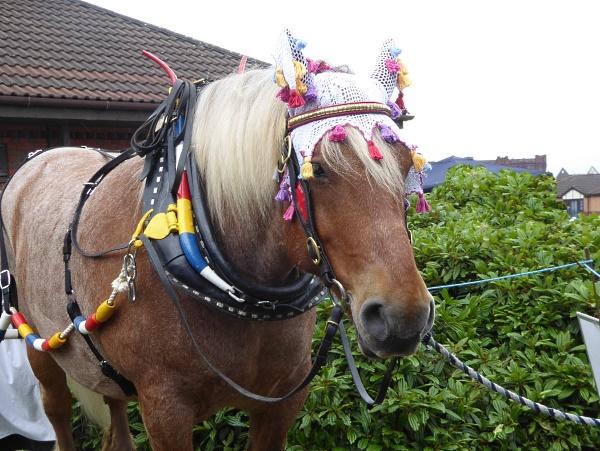 22 Eldonian horse hat