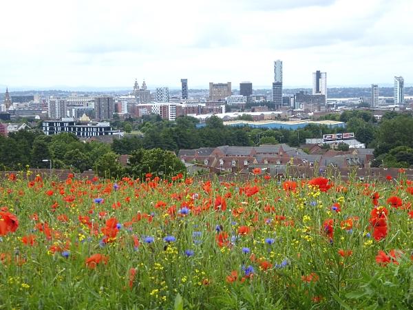 24 Everton city view