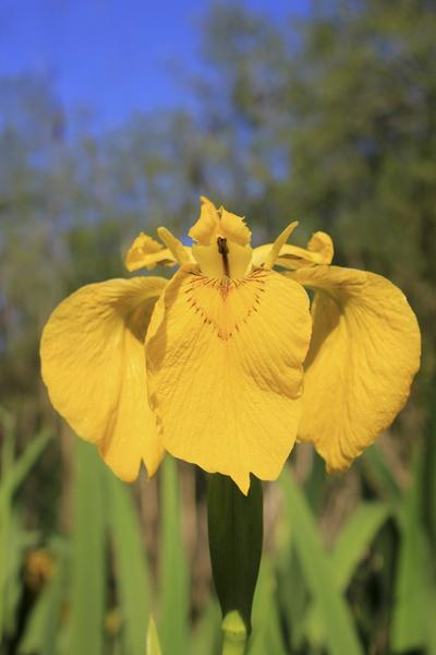 MNA Dibbinsdale Yellow Flag1