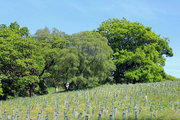 MNA Plant Tree