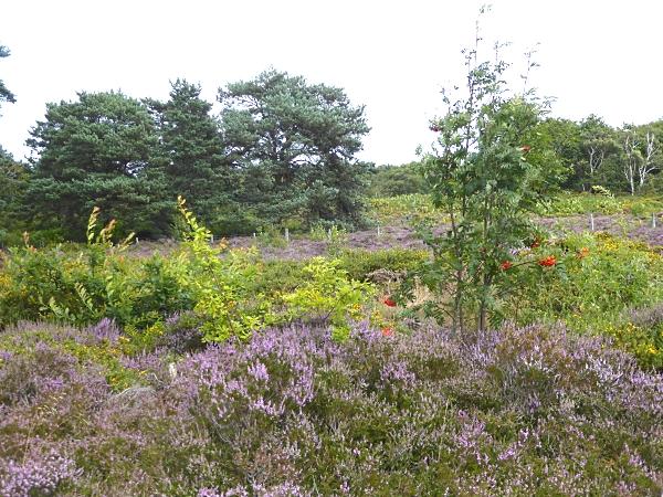 29 Royden heath view