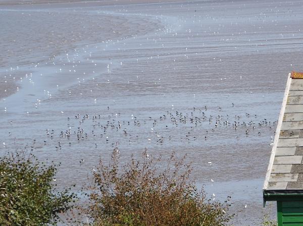 32 Hilbre birds on beach