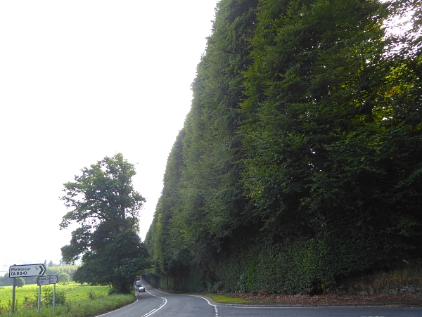 15 Meikleour beech hedge