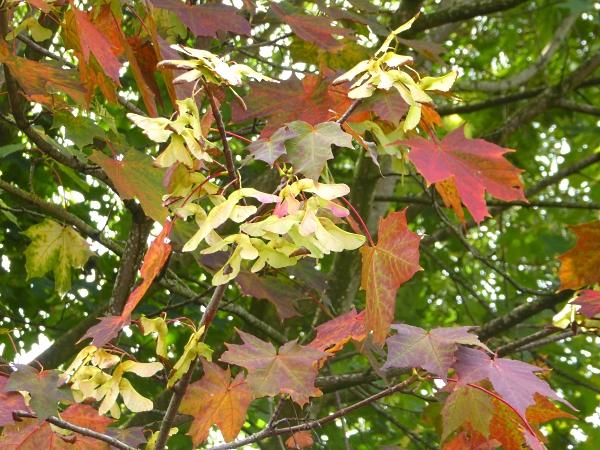 36-chester-autumn-colour