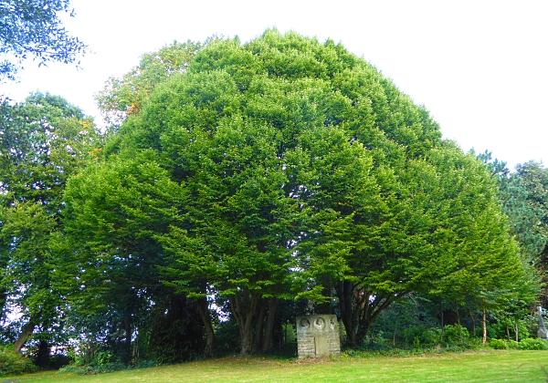 37-flaybrick-hornbeam-grove