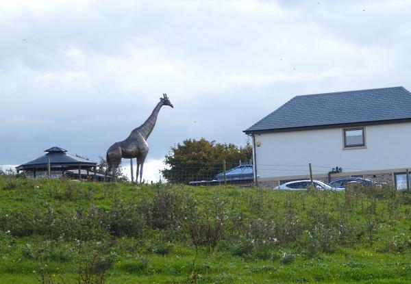 38-apple-giraffe