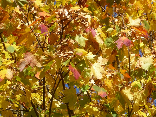 39-centre-autumn-leaves